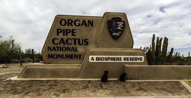 Debby und Faya im Organ Pipe National Monument Foto: Christine Lisse