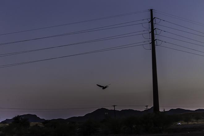 Nachtfalke Foto: Christine Lisse