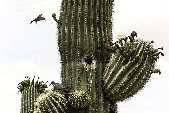 Hausgemeinschaft im Saguaro Foto: Christine Lisse