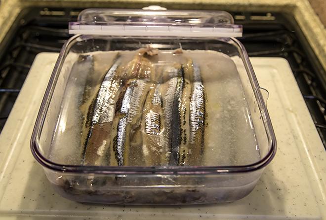 Makrelen im Reifebad Foto: Christine Lisse