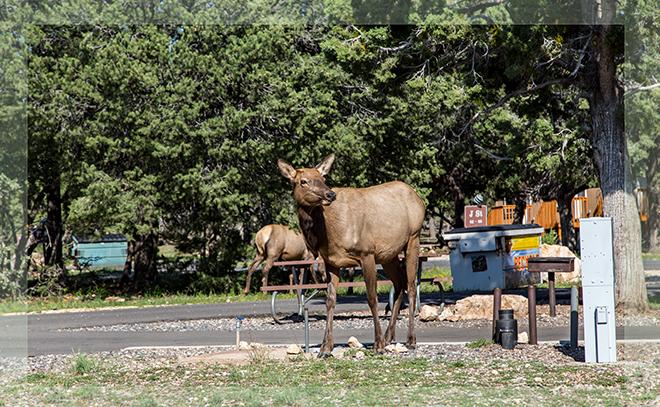 Trailer Village RV Park |Grand Canyon National Park | South Rim | Arizona Foto: Christine Lisse