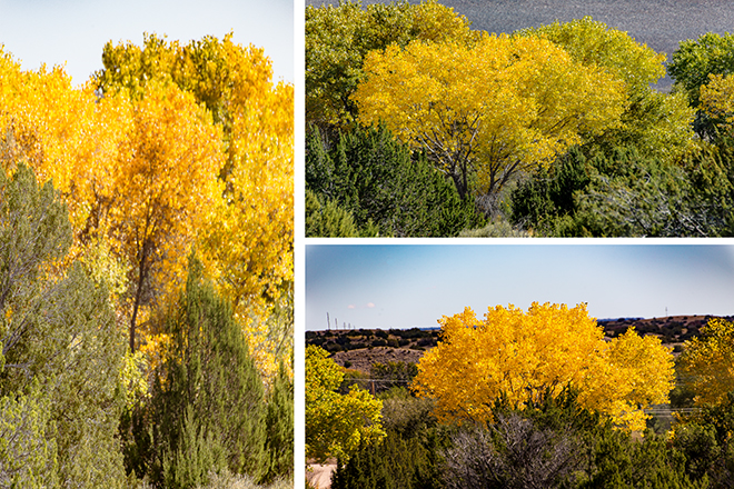 Altweibersommer | Rio Grande | New Mexico Fotos: Christine Lisse