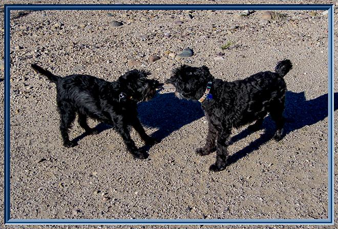 Debby & Faya beim Spielen | Santa Cruz River Park | Tucson | Arizona Foto: Christine Lisse