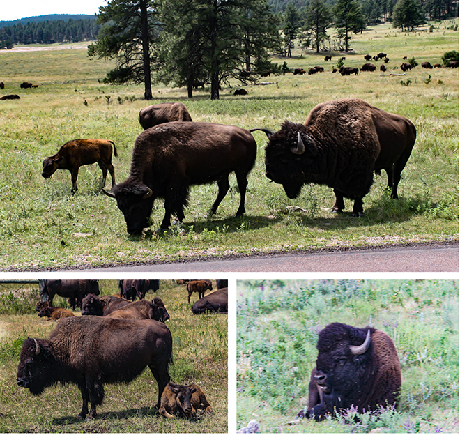 Custer State Park | South Dakota | USA Fotos: Peter Lisse