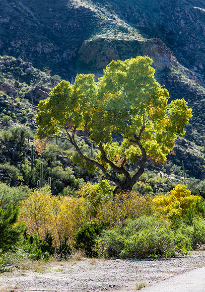 Sabino Canyon | Tucson| Arizona Foto: Christine Lisse