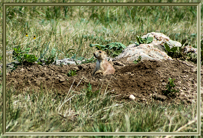 Custer State Park   South Dakota   USA Fotos: Peter Lisse
