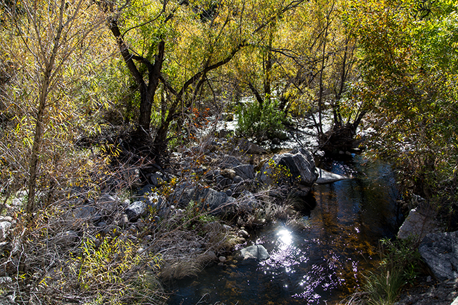Sabino Creek | Sabino Canyon | Tucson| Arizona Foto: Christine Lisse