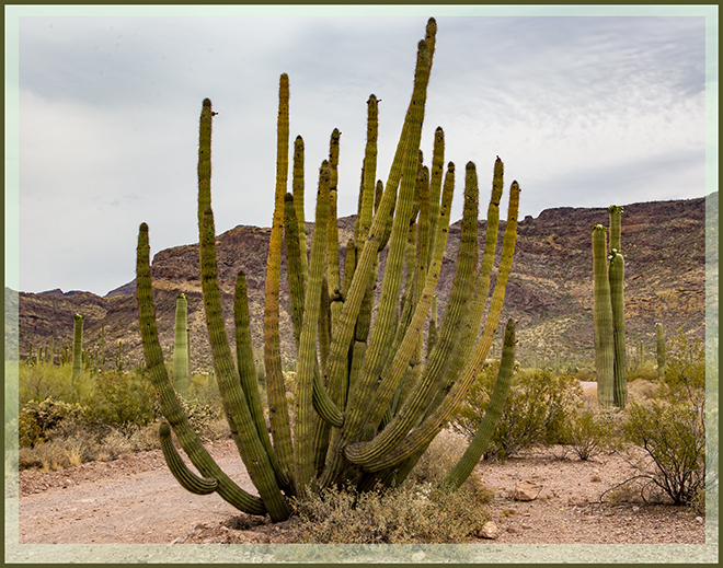 Organ Pipe National Monument | Arizona Foto: Christine Lisse