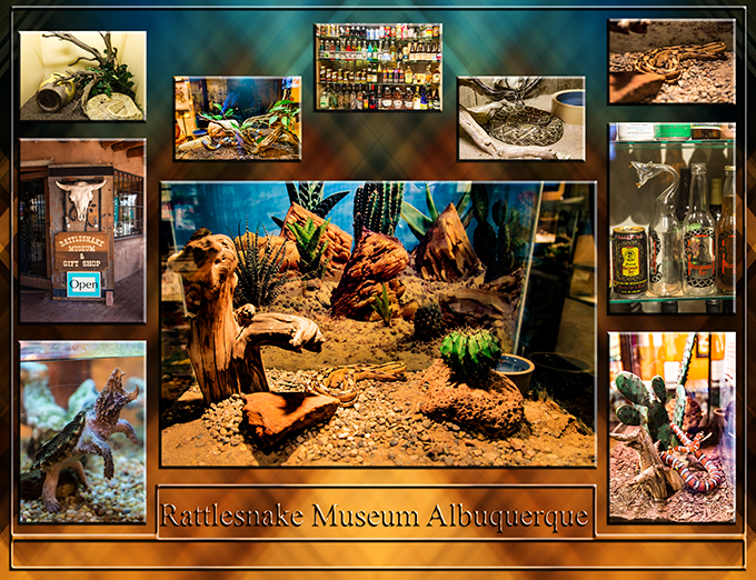 Rattlesnake Museum | Albuquerque | Old Town | New Mexico Foto: Christine Lisse
