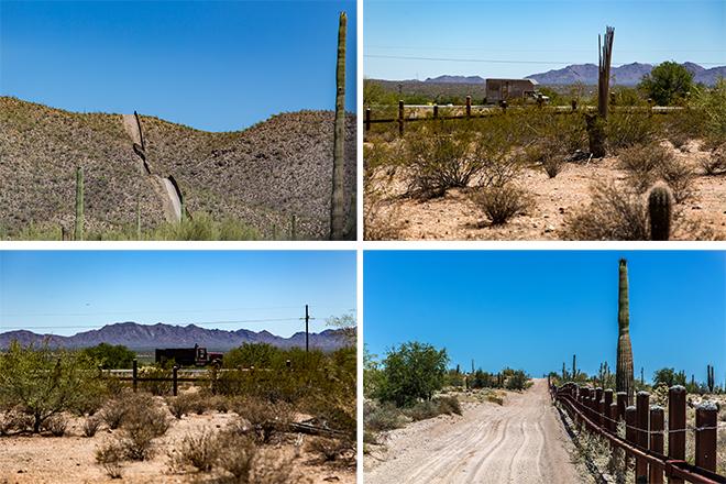 Organ Pipe Cactus National Monument | Arizona Fotos: Christine Lisse