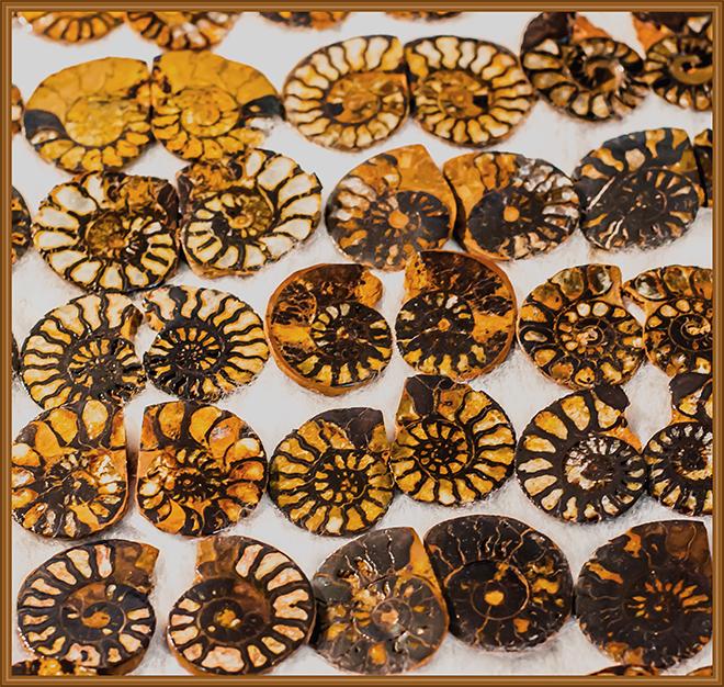Ammonit Gem and  Mineral Show 2016 Tucson Arizona