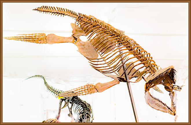 Pliosaurier (Pliosauroidea) Gem and  Mineral Show Tucson