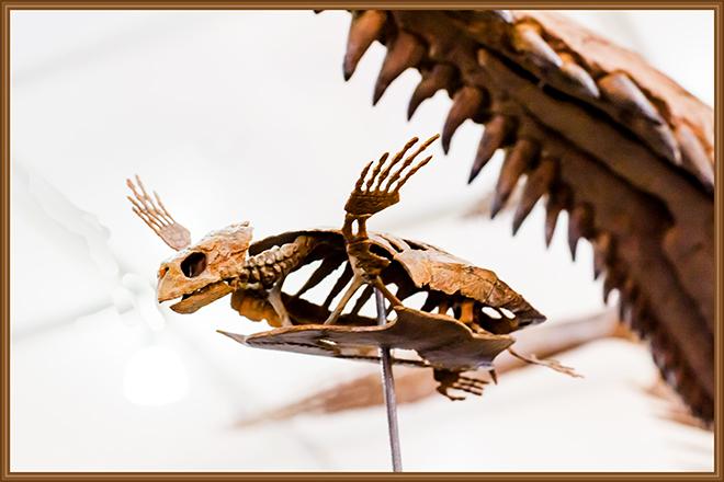Carolinochelys wilsoni Gem and  Mineral Show Tucson