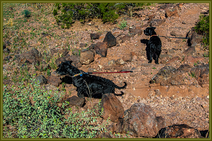 Debby und Faya Picacho Peak State Park Arizona
