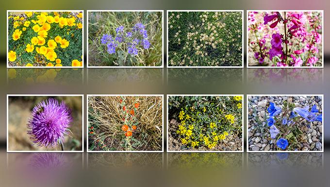 Blumen | März 2016 | Tucson | Arizona Fotos: Christine Lisse