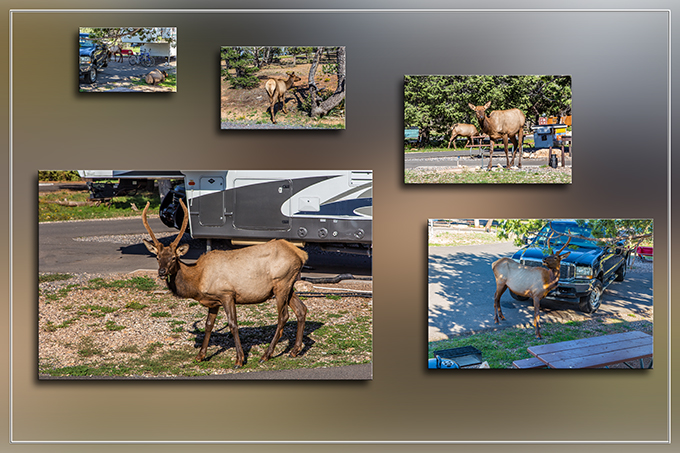 Elks inTrailer Village RV Park | Grand Canyon | Arizona Fotos: Christine Lisse