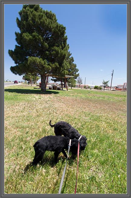 Debby und Faya im Gras