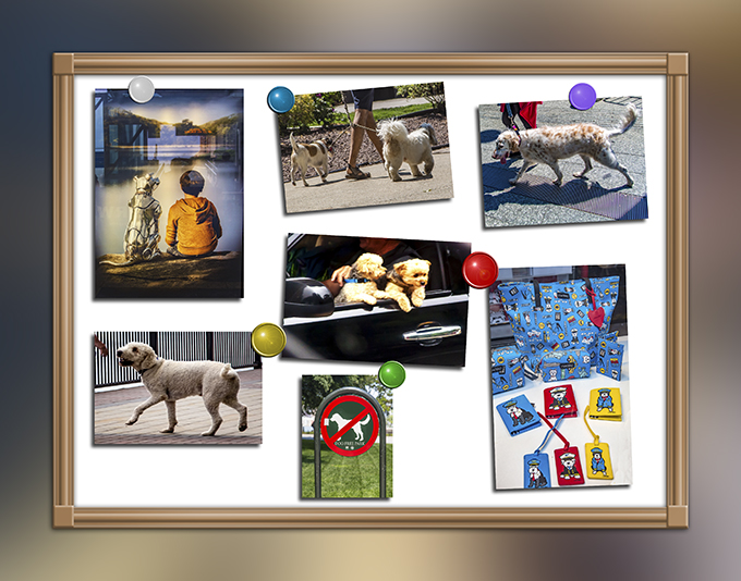 New York Collage   Hunde