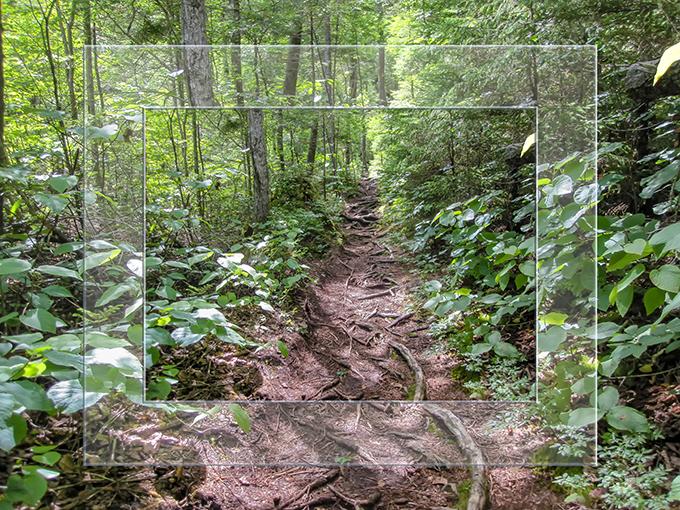 Bemis Brook Trail | Crawford Notch | New Hampshire