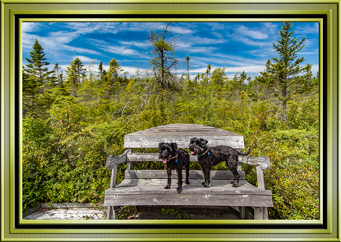 Eagle Hill Bog boardwalk Campobello Island Kanada