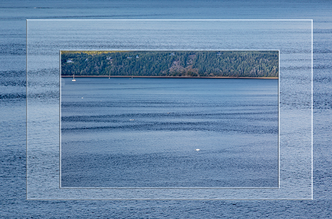 Belugas bei Tadoussac am St. Lorenz Strom in Kanada