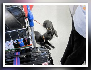 Hunde am Flughafen 2012