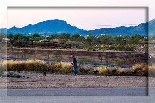 Hundeklo Tucson