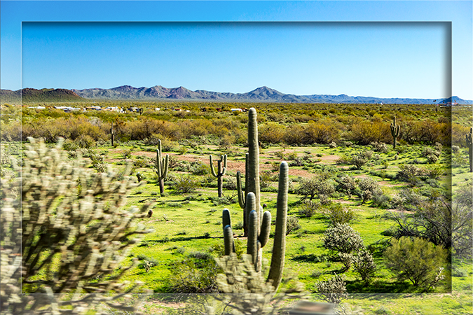 Saguaro Kakteen | Arizona