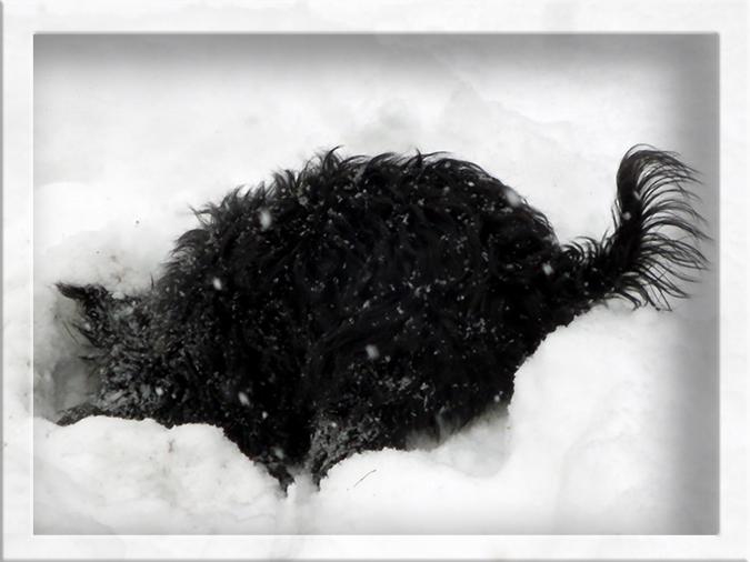 buddeln im Schnee von Alaska