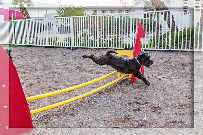 Hundespielplatz Circus Circus Las Vegas Nevada