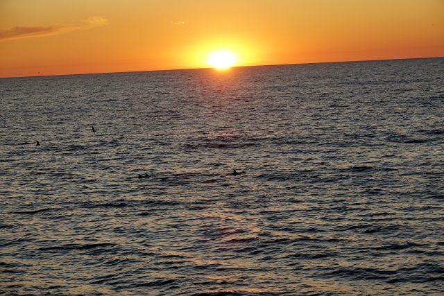 Sonnenuntergang mit Delfinen